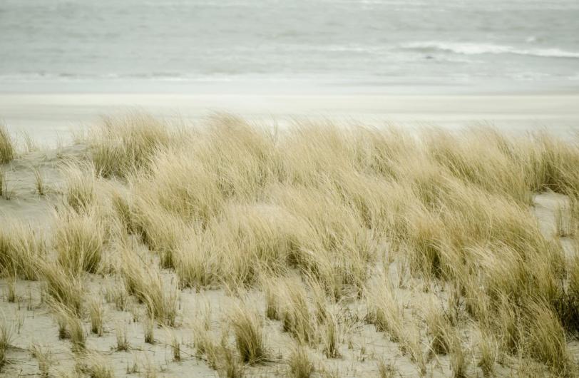 Vlieland's dunes