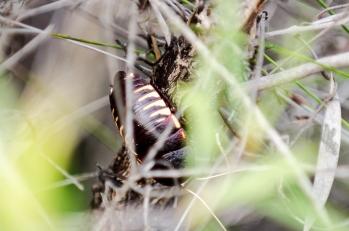 A random endemic beetle. Photo by Mario Sainz Martinez