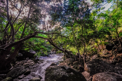 A hidden pool and a wonderful refreshment some  kilometers south from Cooktown. Photo by Veronica Lopez